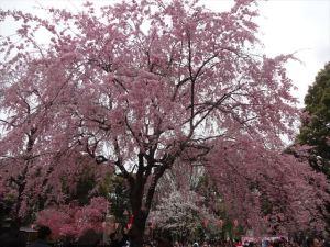 上野恩賜公園5