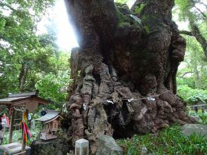 来宮神社7