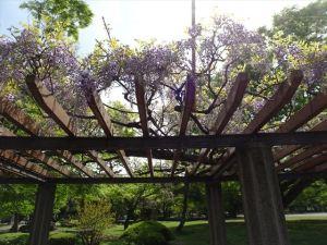 清澄庭園14