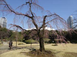 小石川後楽園2