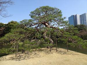 小石川後楽園5