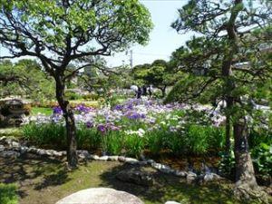 堀切菖蒲園1