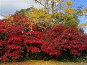 大河内山荘庭園4