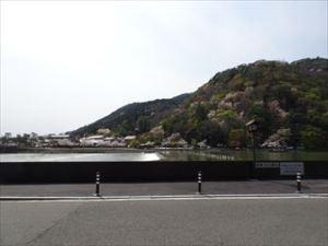アラビカ京都5