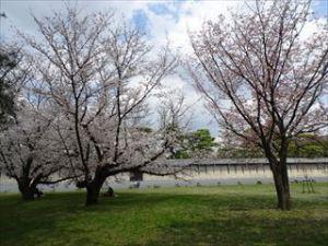京都御苑6