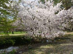 京都御苑8