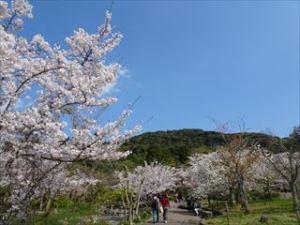 八坂神社8