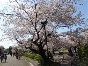 八坂神社9