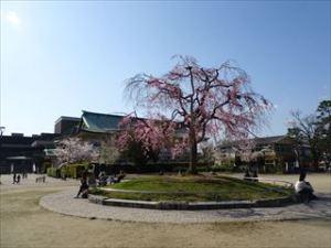 平安神宮3