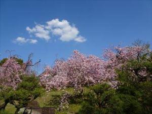 平安神宮10