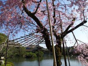 平安神宮16