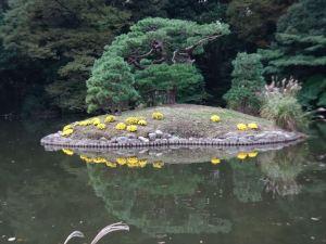 菊花壇10