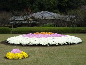 菊花壇13