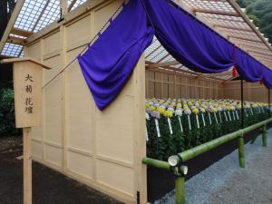 菊花壇18