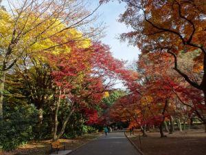 新宿御苑10